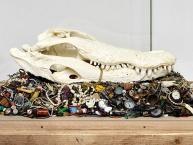 Kunstformen der Natur – Zum 100. Todestag von Ernst Haeckel